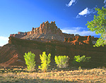 Cottonwood Trees & The Castle in Capitol Reef National Park, Utah