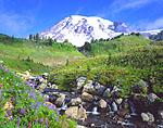 Edith Creek & Mount Rainier, Washington