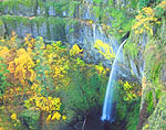 Autumn view of Elowah Falls in the Columbia River Gorge, Oregon