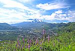 Wildflowers overlooking the hummocks & Mount St. Helens, Washington