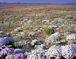 Wildflower display at Hanford Reach National Monument in Washington State