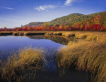 Red maples and marsh grasses with reflections in George Pond, Enfield Wildlife Management Area