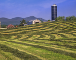 Patterns of fresh cut hay with barn  and Jay Peak background