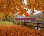 West Cornwall covered bridge with sugar maple leaves in fall over the Housatonic River