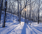Snow covered oak trees and shadow patterns after nor'easter, Mohawk State Forest