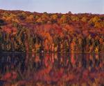 Hillside trees fall colors and reflections in Reuben Hart Reservoir, Litchfield Hills area.