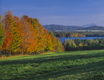 Row of sugar maples edge of field overlooking Lake Carmi with Mt Mansfield background right