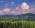 Hillside farms, cornfield and building cumulous clouds