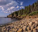 Rugged Atlantic coastline with wave rounded stones and Spruce trees, Acadia National Park