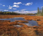 Bass Harbor Marsh, reflection of sky in pools and grasses in fall. Acadia National Park