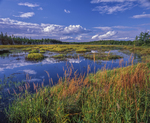 Petit Manan National Wildlife Refuge, fresh water marsh with reflections of sky and clouds