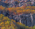 Precipice Ledges with patterns of fall foliage. Nesting area of endangered Peregrin Falcons, Acadia National Park