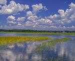 Quonochontaug Pond, cumulus clouds, salt marsh.