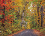 Fall color along country road.