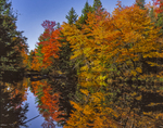 Maple trees and fall reflections in Smith River.