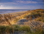 Atlantic ocean beach and primary dune with sea oats and beach grass, Cape Hatteras National Seashore.