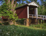 Rinard covered bridge,built 1875, with silver maple and dandelions going to seed.