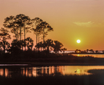 Sunset across marsh and St Joseph Bay, with trees and heron.