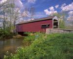 Shenck's Mill covered bridge, built 1855, and wild garlic mustard.