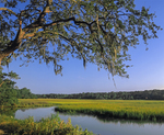 Marsh view at Clam Creek with live oak tree.