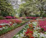 Azaleas and brick walk through gardens at Orton Plantation