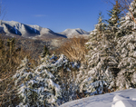 White Mtn National Forest after fresh snow with snow covered trees and Mtn views.