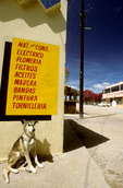 Sleepy dog below sign in San Carlos, Baja California Sur, Mexico, Mexican village, Mexican town,