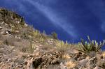Southern Sonoran Desert landscape, Baja, Mexico