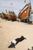 Sleeping dog and fishing boat at fish camp in Piriapolis in Maldonado Uruguay