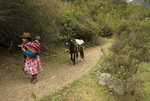 Peruvian woman with child leading horse on Inca Trail in Cusichaca Valley Peru