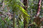 Daintree Rainforest near Cape Tribulation in north Queensland Australia