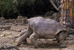 Galapagos giant tortoise named