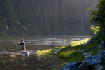 Angler fly fishing on world-famous trout stream Kelly Creek in the Clearwater National Forest in Idaho during evening caddisfly hatch