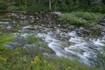 Meadow Creek near the Meadow Creek Guard Station in the Nez Perce National Forest ID