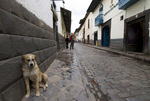Dog leaning against building in alley in Cusco Peru