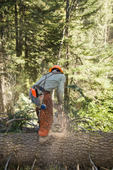 Sawyer cutting a log on a timber sale on private land in central Idaho