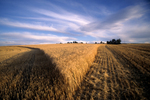 Partially-harvested barley field in eastern Idaho