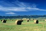 Round hay bales in Teton County in eastern Idaho