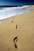 Footprints in the sand along the Pacific Ocean near Todos Santos, Baja California Sur, Mexico