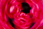 spinning roses abstract