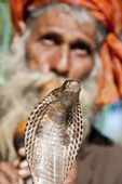 Snake charmer in Delhi India