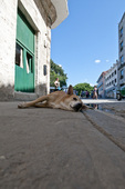 Stray dog lying on sidewalk in Havana Cuba