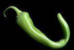 Green Anaheim chili pepper (Capsicum annuum)