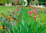 Tulips brighten the formal flower beds of the Tuileries Gardens.