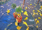 Fall leaves on a terrace table outside the Bates & Schmitt Apple Farm, at Philo, in Anderson Valley wine country.