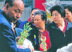 Shoppers buying young bamboo plants in Chinatown at the Flower Fair during the Chinese New Year festivities.  Bamboo is often associated with