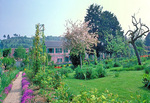 The Clos Normand garden slopes gently down from Monet's house at Giverny.