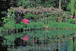 Reflections of azaleas and pink wisteria in Monet's water garden at Giverny.