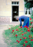 Frenchman in blue work clothes tends his spring garden in Saumur.