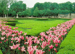 Spring lilies and boxwood hedges laid out in an intricate pattern in the Tuileries Garden outside the Louvre.